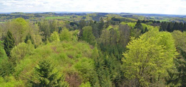 Erhöhte Brandgefahr in den oberbergischen Wäldern